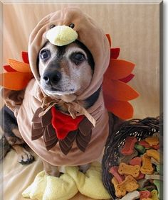 Community Post: Happy Dogs-Giving!