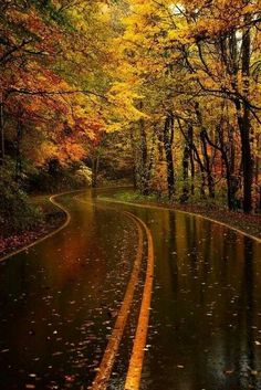 Rain Washed Streets, for a nice slow drive to soak it all up. Love the colors, the smells and the relaxing tones of fall.