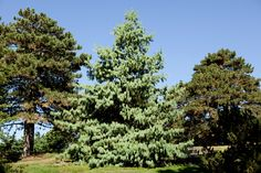 What's Beautiful Now: The Conifers | NYBG