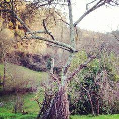 Árbol seco. #Asturias
