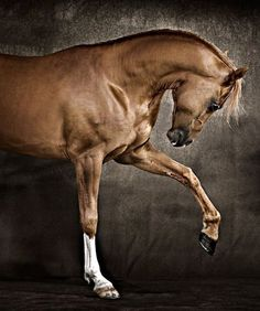 """""""Witching and sweet is the music earth steals from the iron-shod feet"""" of horses."""