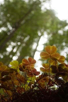 The forest floor from a bugs perspective.