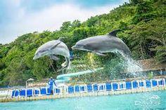 Swim with Dolphins Montego Bay Jamaica