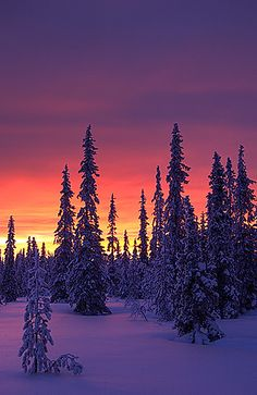 Polar glow, Vuotso, Finland - nature's beautiful colors. balancedwomensblog.com