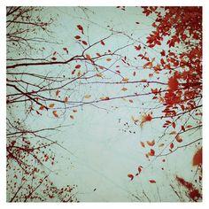 Autumn's Reach