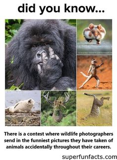 TheComedy Wildlife Photography Awards are based in England, but they receive submissions from all over