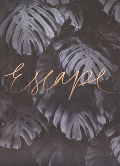 Escape rose gold print by Blacklist studio. blackliststore.com.au