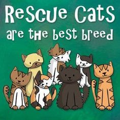 rescue-cat-best-breed.jpg (451×451)