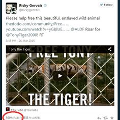 So Ricky Gervais tweeted about me and we got 500 RTs! ROARS Mr. G! #tiger #tigers #tigertruckstop #captivetigers #freetonytiger #Louisiana