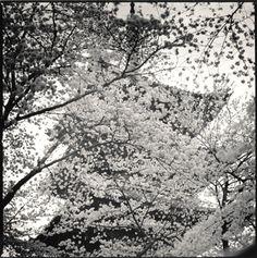 Hiroshi Watanabe Photography-Kaneiji Gojunotou, Tokyo, Japan