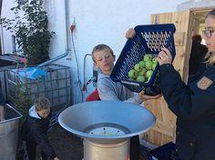 Æblemost skal være en fast del af skoleskemaet. Det mener iværksætter, der samler havefrugt med børn på Amager.