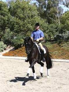 A Guide to Dressage Gaits with Olympian Jan Ebeling from Practical Horseman | EquiSearch.com