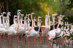 Fenicotteri rosa al Parco Zoo Punta Verde