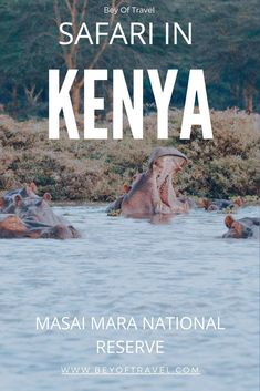 The Masai Mara is a safari experience like no other and provides one the best opportunities to spot all of the big five on safari! This guide will show you how to plan your Kenya budget safari. Kenya Travel, Morocco Travel, Africa Travel, Africa Destinations, Travel Destinations, Uganda, Diani Beach, Travel Guides, Travel Advice