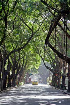 "Ipanema Trees, Rio de Janeiro, Brazil .................... #GlobeTripper® | https://www.globe-tripper.com | ""Home-made Hospitality"" | http://globe-tripper.tumblr.com/"