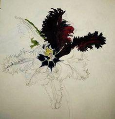 Tulip, Black Parrot