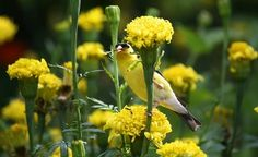 Attract birds to your backyard with these seasonal plant picks.