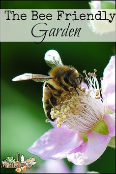 Bee House in the Bee Friendly Garden l Tips on creating a bee friendly garden…