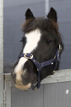 Love horses? You'll love Your Horse Live. Check out the website for more details on what this event has to offer