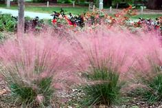 Nice list of Ornamental grasses