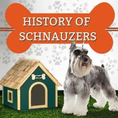 History of Schnauzers  http://mentalitch.com/history-of-schnauzers/