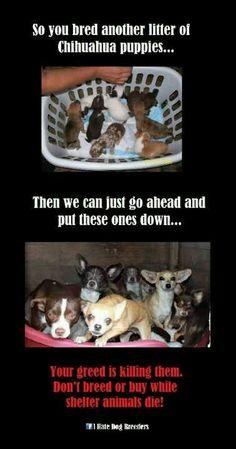 Backyard breeders...