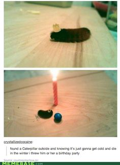 "I just want a caterpillar. I also love that its ""Birthday party"" consists of a candle, a crown and an M Precious."