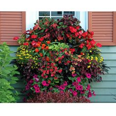 Next summer I want a window box like this. I plan to layer flowers in a window box outside my kitchen window. This overflowing window box is home to Coleus, geraniums, petunias, calibrachoa and fuchsia. Container Flowers, Container Plants, Container Gardening, Gardening Hacks, Gardening Quotes, Hydroponic Gardening, Window Box Plants, Window Planter Boxes, Planter Ideas