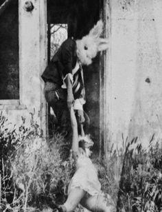 Mr rabbit II