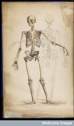 80 best scientific illustration medical images on pinterest rh pinterest com Skeleton Hand Joints Diagram Shoulder Anatomy Diagram