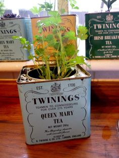 Vintage Twinings tea containers for windowsill herb garden. #vintage #herbs