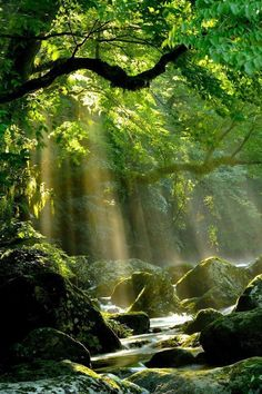 Landscape pictures nature rivers New Ideas Beautiful World, Beautiful Places, Beautiful Pictures, Beautiful Forest, Trees Beautiful, Beautiful Nature Wallpaper, Stunningly Beautiful, All Nature, Amazing Nature
