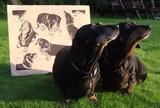 Dachshund Handmade Print.  This linocut illustrates the lovely dachshunds Lily and Daisy who live a few doors down from me, two sisters from the same litter. Dachshunds are amongst my favourite dog breeds, and Lily and Daisy are especially sweet, particularly when they are posing prettily for dog biscuits. (scheduled via http://www.tailwindapp.com?utm_source=pinterest&utm_medium=twpin)