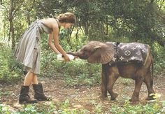 My dream - not sure if this is Thailand but I'd love to feed a baby elephant.