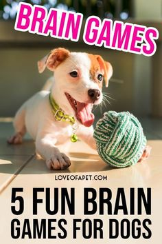 Brain Games For Dogs, Dog Games, Games For Puppies, Puppies Gif, Dog Training Techniques, Dog Training Tips, Brain Training, Potty Training, Dog Enrichment