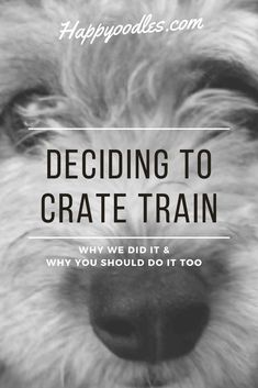 Deciding to crate train is a personal choice. Some people truly believe in the benefits and others don't. I didn't care for it. The thought of my puppy locked in a cage made me sad. Growing up we never crate trained our dogs. So when we brought home our first puppy as a married couple and someone suggested we try it, I was against it. But then something happened to change my mind. Join us as we reveal the reasons we decided that crate training was the best option for us. (#cratetraining) Crate Training, Training Tips, Dog Training, Puppy Socialization, Tea Cup Poodle, Puppy Biting, Dog Boarding, New Puppy, Dog Care