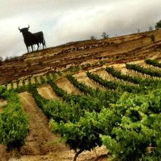 Wine La Rioja Spain, el toro negro está en todas las autopistas del país.