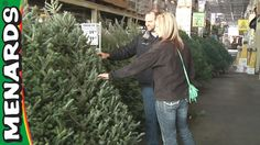 in this video we detail the different kinds of fresh cut christmas trees to choose from at menards and what you need to do once you get your tree home