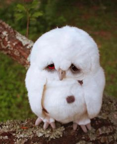 Amazing Things in the World.  cute white owl ♥ ♥