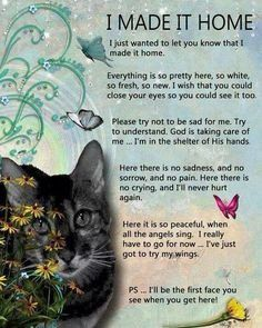 Pet Loss Quotes Cats. QuotesGram                                                                                                                                                                                 More