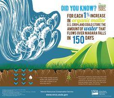 Image result for fertiliser soil health