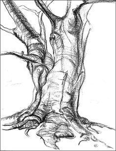 how to draw leaves on a tree - Google Search