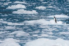 Lost on the ice Photo by Philip Field -- National Geographic Your Shot