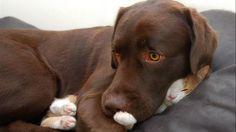"""Hessel en Hannes, wie kent ze niet? Het zijn een kat en hond uit Hardenberg met meer dan 240.000 likes op <a href=""""https://www.facebook.com/hesselandhannes/"""" target=""""_blank"""">Facebook.</a>"""