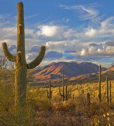 Sweet Home Arizona