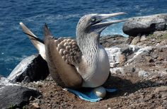 Viaje de Darwin a las Islas Galápagos