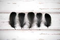 Goose Feathers, Feather Crafts, The Selection, Silver, Gold, Glitter, Touch, Shape, Black