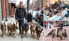 Meet the dog whisperer whose UNLEASHED harem of German Shepherds follow him wherever he goes (even to bed!)