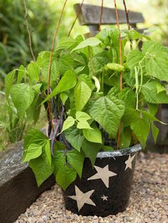 TOP 10 Miniature Vegetables to Grow in Pots - Top Inspired