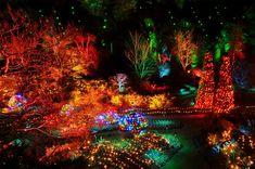 Butchart Gardens - The Sunken Garden at twilight at Christmas time. Stunning winter garden display!